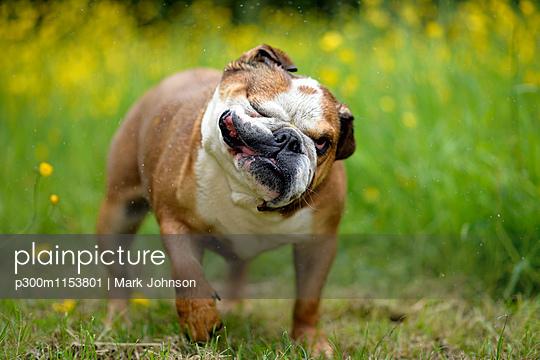 p300m1153801 von Mark Johnson