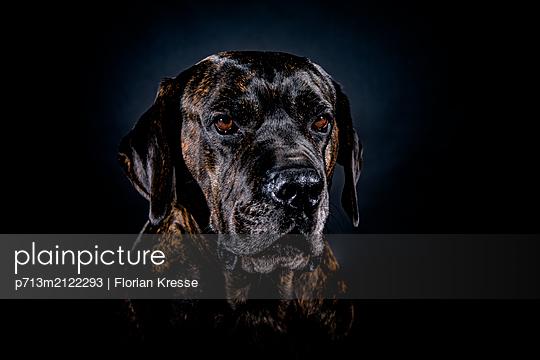 p713m2122293 by Florian Kresse