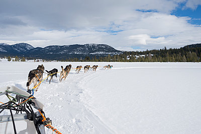 Rear view of huskies pulling sled through snow against cloudy sky - p1166m1485610 by Cavan Images
