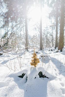 Künstlicher Tannenbaum im verschneiten Wald - p586m2005085 von Kniel Synnatzschke