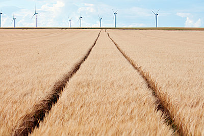 Wheel tracks in barley field and wind park in the background - p719m1446421 by Rudi Sebastian