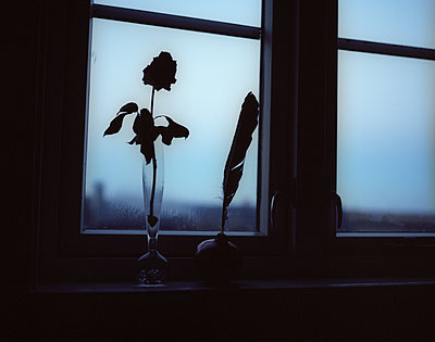 Rose and quill on windowsill - p945m1480847 by aurelia frey