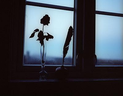 Rose und Schreibfeder auf einem Fensterbrett - p945m1480847 von aurelia frey
