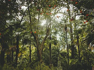 Jungle - p1681m2263299 by Juan Alfonso Solis