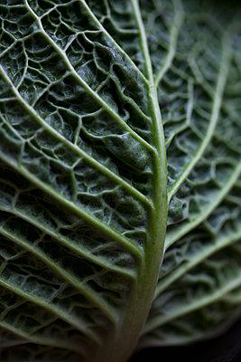 Full frame shot of cabbage leaf - p301m1102100f by Halfdark