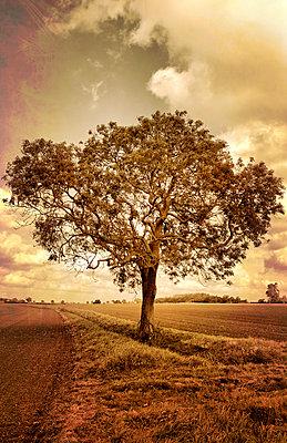 Baum am Feldrand - p1248m1045195 von miguel sobreira