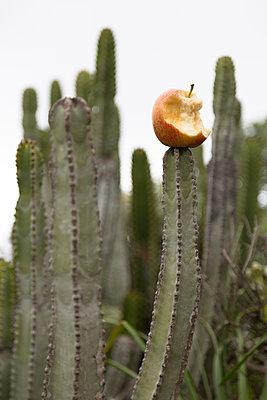 A bitten apple, left on a cactus - p1682m2260728 by Régine Heintz