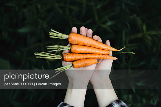 Woman holding a bunch of carrots. - p1166m2111939 by Cavan Images