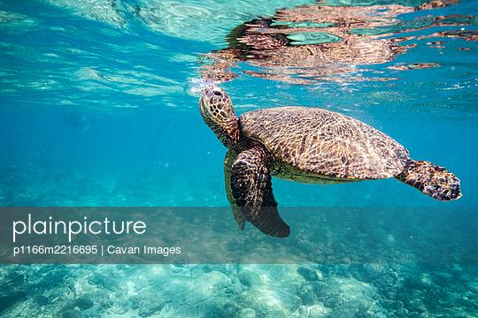 p1166m2216695 von Cavan Images