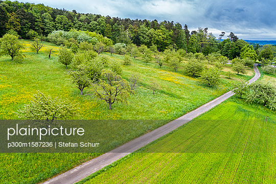 Germany, Baden-Wuerttemberg, Swabian Franconian forest, Rems-Murr-Kreis, Aerial view of meadow with scattered fruit trees and road - p300m1587236 von Stefan Schurr