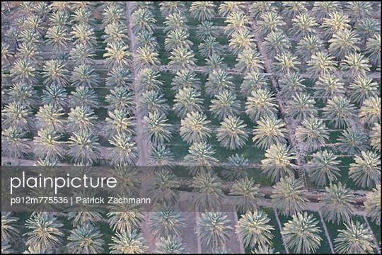 p912m775536 von Patrick Zachmann