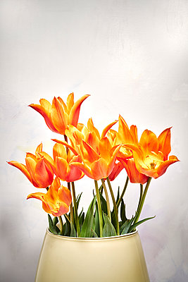 Vase with tulips against white wall - p1312m2272149 by Axel Killian