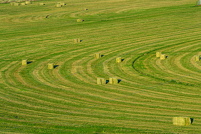 Hay bales in field in Picabo, Idaho, USA - p1427m2136098 by Steve Smith