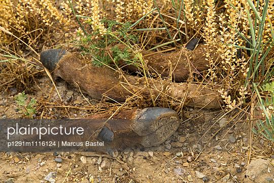 Deer - p1291m1116124 by Marcus Bastel