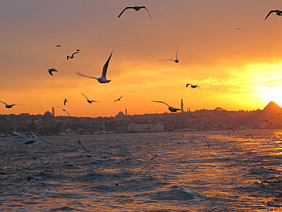 Turkey, Istanbul, Seagulls flying at sunset over Bosphorus - p300m1081472f by Pascal Miller