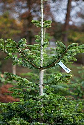 Weihnachtsbaum - p361m901309 von Ute Behrend