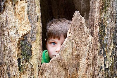 Junge im Baumstamm - p1308m2247485 von felice douglas