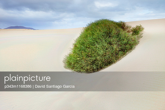 Sand dunes, near Corralejo, Fuerteventura, Canary Islands, Spain, Atlantic, Europe - p343m1168386 by David Santiago Garcia