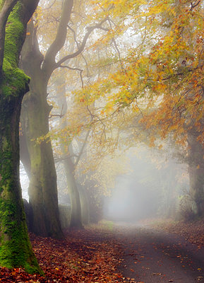 England, West Yorkshire, Calderdale. Country lane in autumn fog. - p651m2152402 by Robert Birkby