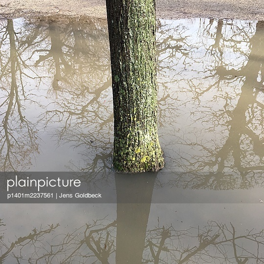 Tree in a puddle - p1401m2237561 by Jens Goldbeck
