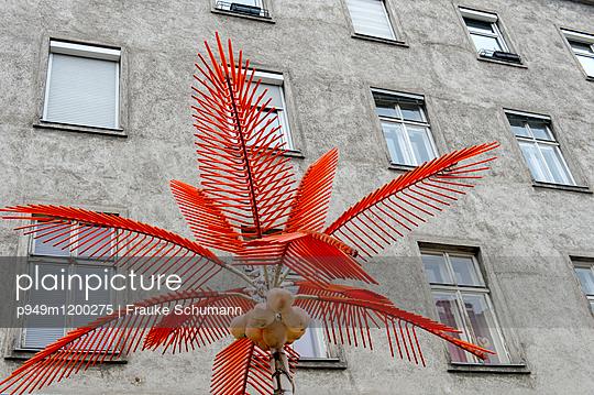 rote Palme vor Haus - p949m1200275 von Frauke Schumann