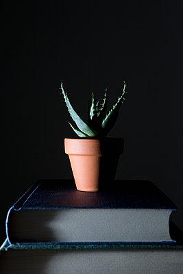 Aloe vera - p1149m1132447 by Yvonne Röder