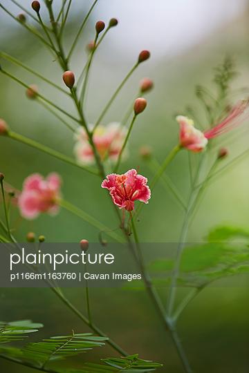 p1166m1163760 von Cavan Images