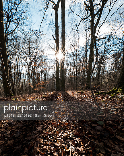Foliage on forest soil against the light - p1549m2245192 by Sam Green
