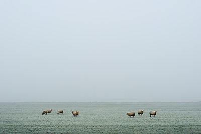 Fog in Friesland - p1132m973436 by Mischa Keijser