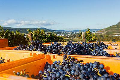Im Weingebiet - p1271m1539696 von Maurice Kohl