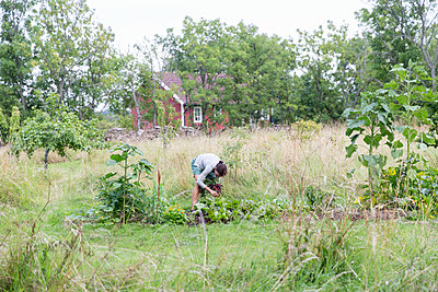Woman on vegetable patch - p312m1229183 by Ulf Huett Nilsson