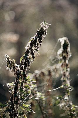 Spinnweben - p5450080 von Ulf Philipowski