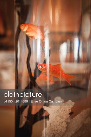 Goldfische - p1150m2014688 von Elise Ortiou Campion