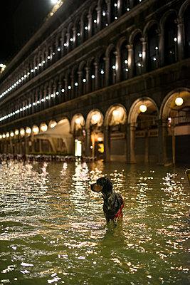 Acqua Alta (Hochwasser) auf dem Markusplatz, Venedig - p1493m1584647 von Alexander Mertsch