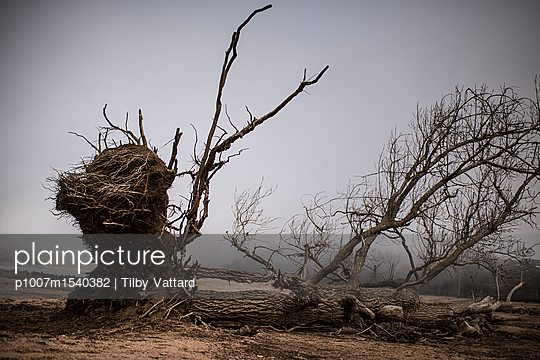 Stump and roots - p1007m1540382 by Tilby Vattard