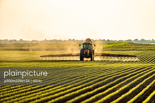 Tractor spraying soybean crops at sunset - p300m2294124 by oticki