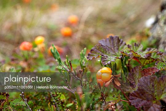 p352m1100166f von Helena Bonnevier