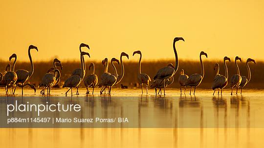 p884m1145497 von Mario Suarez Porras/ BIA