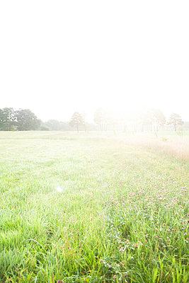 Landmorgen - p447m1219368 von Anja Lubitz