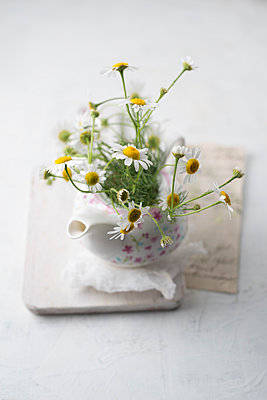 Chamomile flowers in a tea pot - p300m2029969 by Mandy Reschke