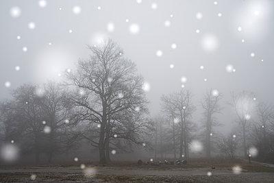 Winterlandschaft - p401m1207776 von Frank Baquet