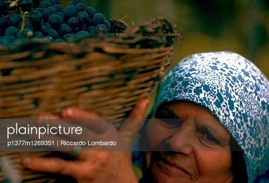 Old woman carrying a basket during grape harvesting - p1377m1269351 by Riccardo Lombardo