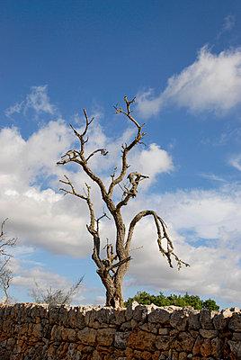 Abgestorbener Baum - p260m1072998 von Frank Dan Hofacker
