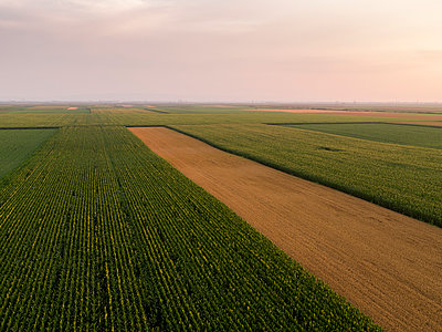 Serbia, Vojvodina, Aerial view of corn, wheat and soybean fields in the late summer afternoon - p300m2012904 von oticki
