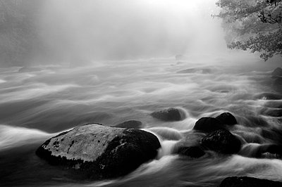 A small river in nature reserve, Vastergotland, Sweden. - p5755411f by Mikael Svensson