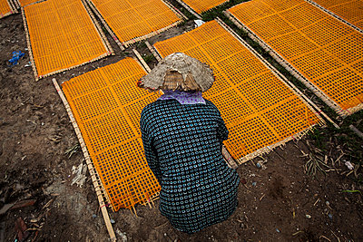 Vermicelli sheets drying on bamboo racks in Cu Da Village in the outskirts of Hanoi, Vietnam, Southeast Asia - p934m1093541f by Aaron Joel Santos
