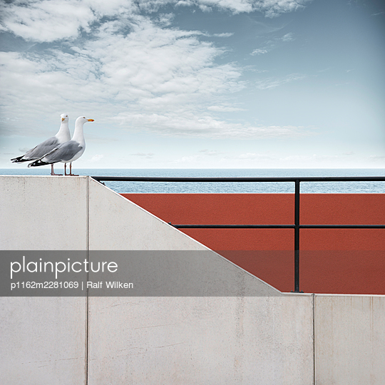 Two seagulls perched on sea wall - p1162m2281069 by Ralf Wilken