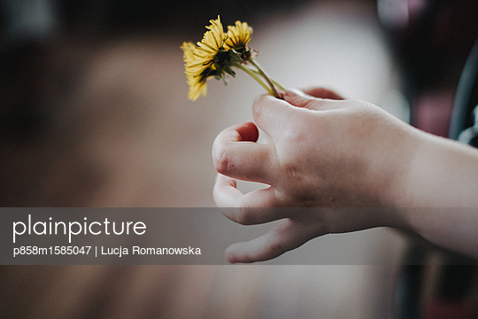 Dandelion for you - p858m1585047 by Lucja Romanowska