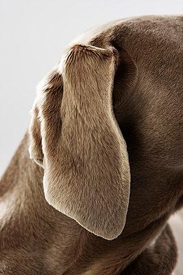 Hunting dog - p4030475 by Helge Sauber