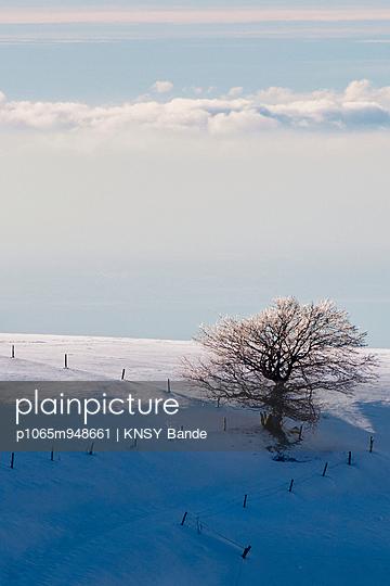 Einzelner Baum in einer Schneelandschaft - p1065m948661 von KNSY Bande